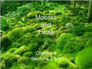 Mosses  and  Ferns Chapter 9 Sections 3 & 4