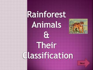 Rainforest Animals &  Their Classification