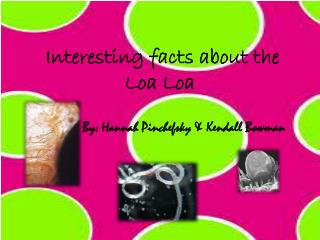 Interesting facts about the Loa Loa