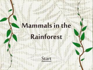 Mammals in the Rainforest