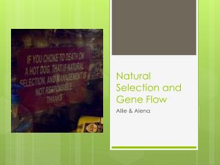 Natural Selection and Gene Flow