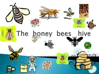 The  honey  bees   hive