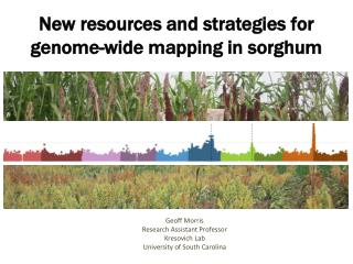 New resources and strategies for genome-wide mapping in sorghum