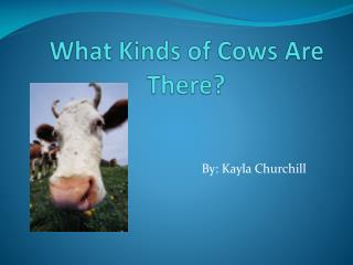 What Kinds of Cows Are There?