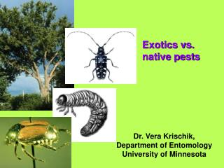 Exotics vs.  native pests