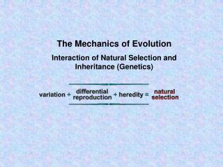 The Mechanics of Evolution Interaction of Natural Selection and Inheritance (Genetics)