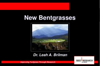New Bentgrasses