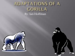 Adaptations of a Gorilla