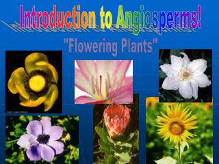 Introduction to Angiosperms!