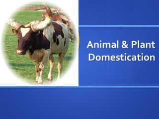Animal & Plant Domestication