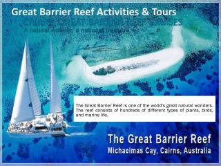 Great Barrier Reef Activities And Tours