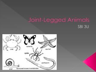 Joint-Legged  Animals