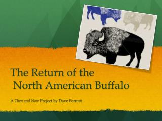 The Return of the   North American Buffalo