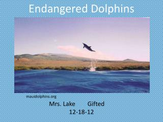 Endangered Dolphins