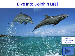 Dive into Dolphin Life!