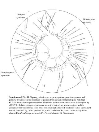 Diterpene synthases