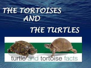 THE TORTOISES AND