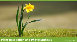 Plant Respiration  and Photosynthesis