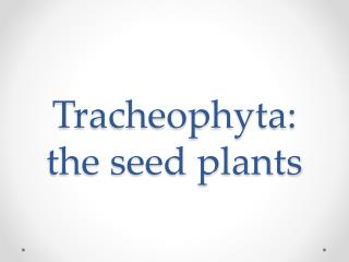 Tracheophyta : the seed plants