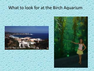 What to look for at the Birch Aquarium