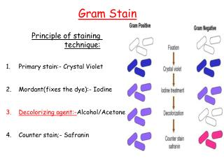 Principle of staining technique: