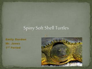 Spiny Soft Shell Turtles