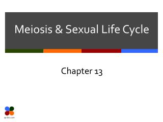 Meiosis & Sexual Life Cycle