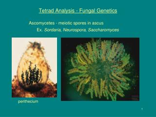 Tetrad Analysis - Fungal Genetics