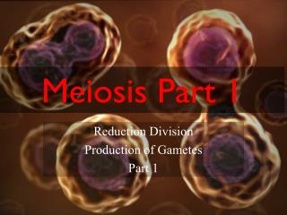 Meiosis Part 1