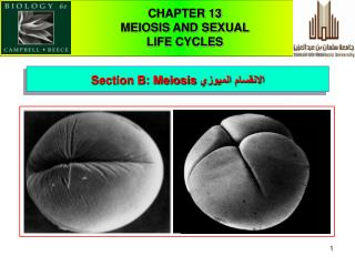 CHAPTER 13  MEIOSIS AND SEXUAL                                    LIFE CYCLES