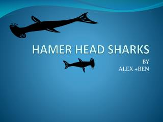 HAMER HEAD SHARKS