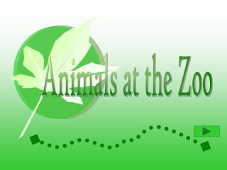 Animals at the Zoo