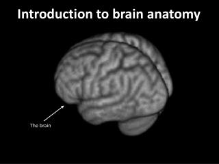 Introduction to brain anatomy