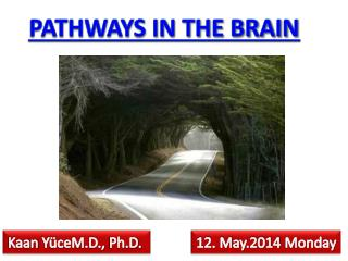 PATHWAYS IN THE BRAIN