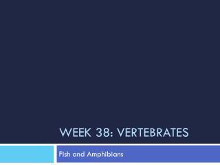 Week 38: Vertebrates