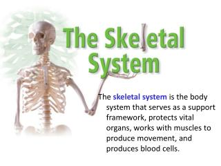 Functions of Skeletal System