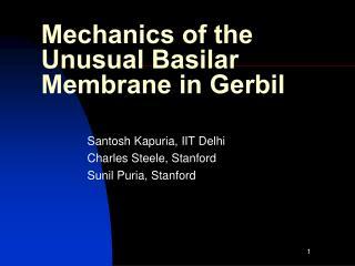 Mechanics of the Unusual Basilar Membrane in Gerbil