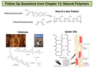 Follow Up Questions from Chapter 13: Natural Polymers