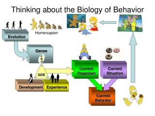 Thinking about the Biology of Behavior