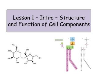 Lesson 1 – Intro – Structure and Function of Cell Components