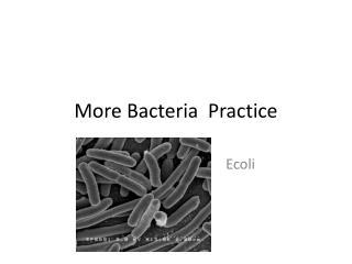More Bacteria Practice