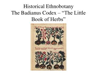 "Historical Ethnobotany The Badianus Codex – ""The Little Book of Herbs"""
