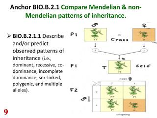 Anchor BIO.B.2.1  Compare Mendelian & non-Mendelian patterns of inheritance.
