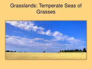 Grasslands: Temperate Seas of Grasses