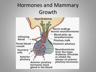Hormones and Mammary Growth