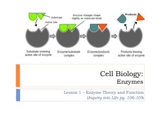 Cell Biology: Enzymes