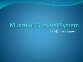 Muscular/Skeletal System