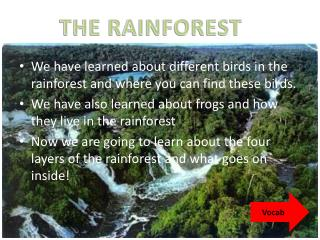 We have learned about different birds in the rainforest and where you can find these birds.
