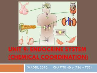 UNIT 9: ENDOCRINE SYSTEM  (CHEMICAL COORDINATION)
