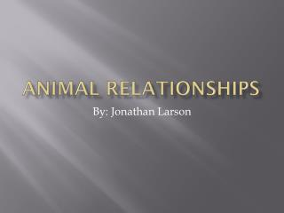 Animal relationships